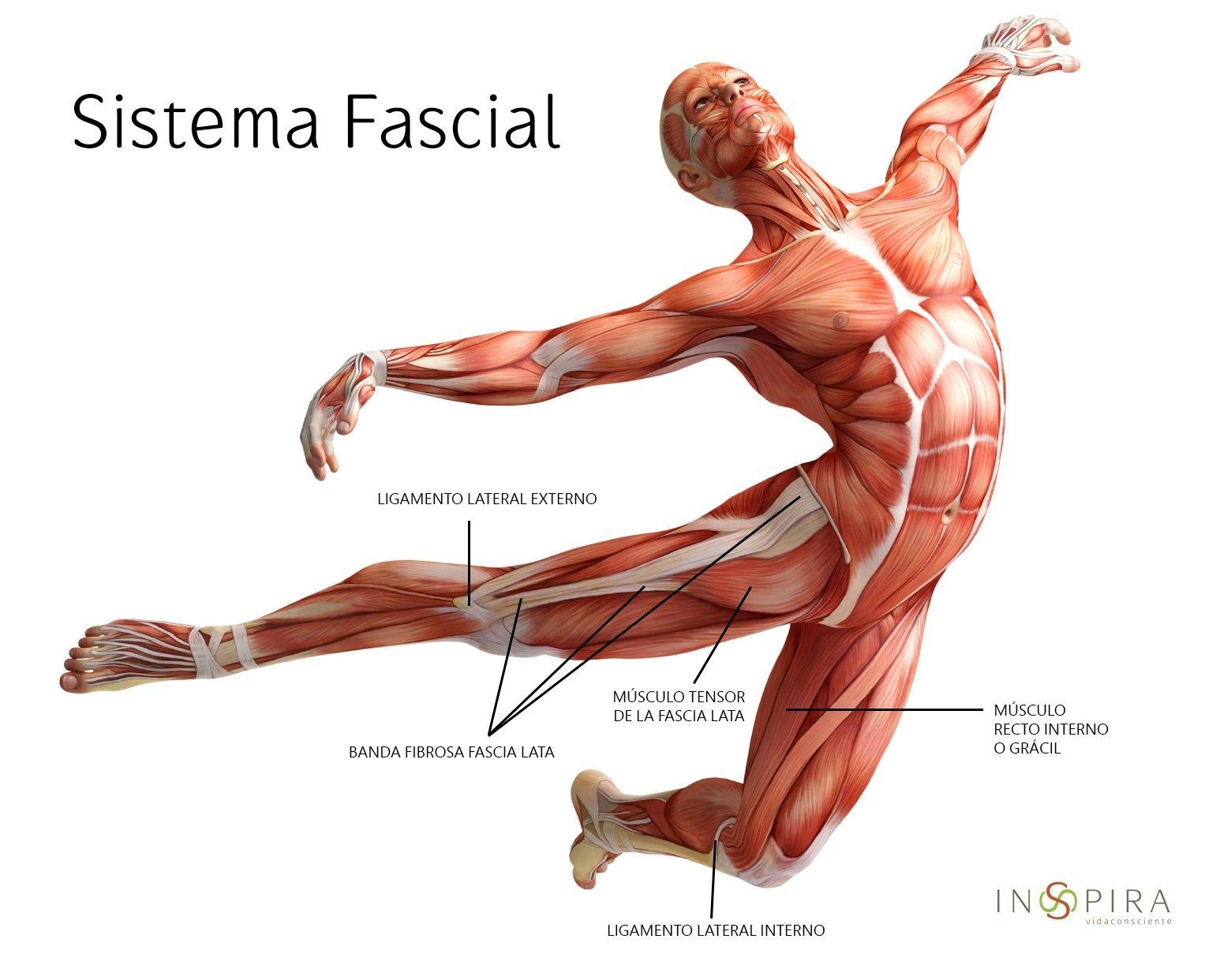 Sistema Fascial
